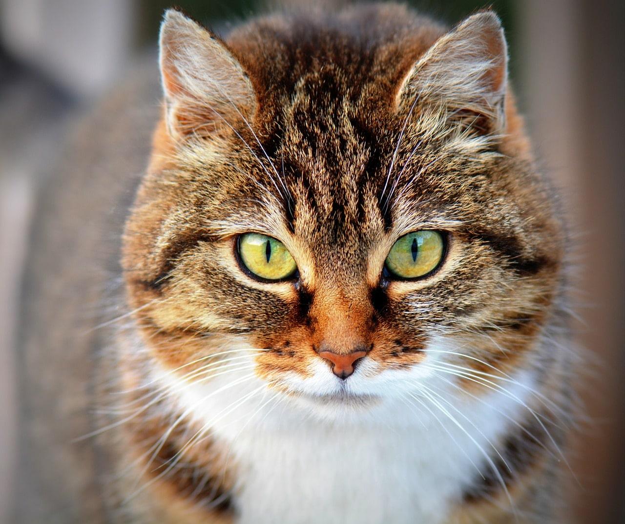 Senior cat losing weight