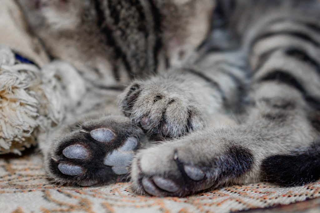 How to keep your declawed cat comfortable
