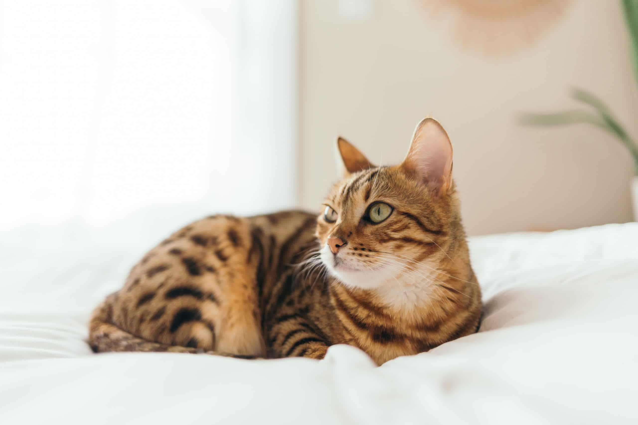 Chronic kidney disease can cause your cat to drink excessive amounts of water.