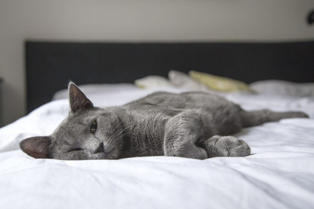 Lethargy and vomiting are common symptoms of a lot of medical conditions in senior cats